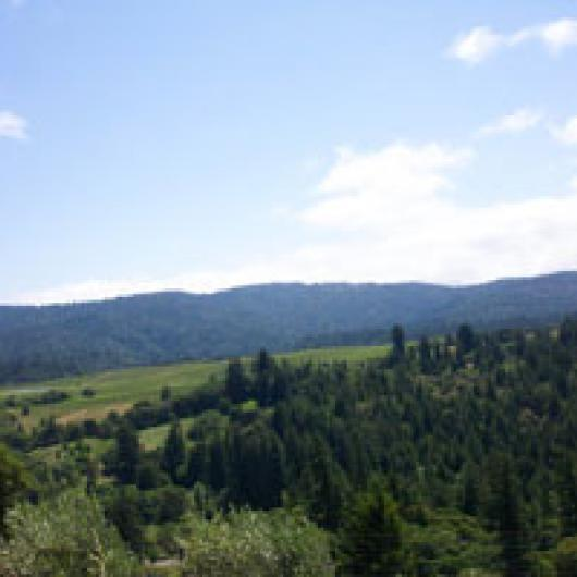The view from the hills above Anderson Valley