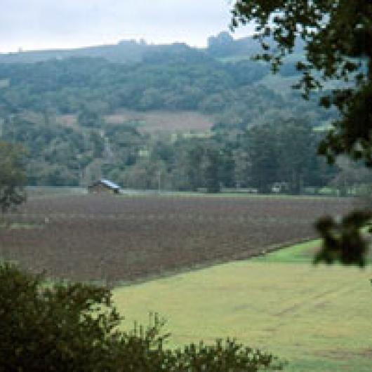 Bennett Valley supports a number of small holdings planted to vineyards