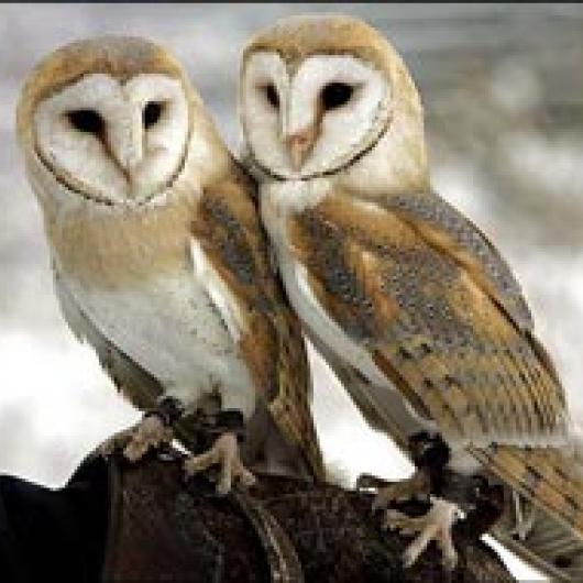 Barn owls are encouraged near the vineyard to control gophers.