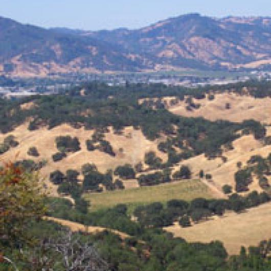 View from top of the Bartolomei ranch  to vineyard below along McClure Creek with Ukiah in the background