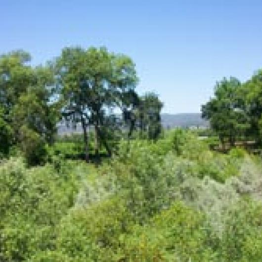Napa River adjacent to Big Ranch