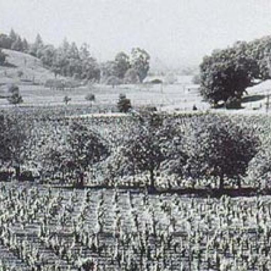 The second BV vineyard