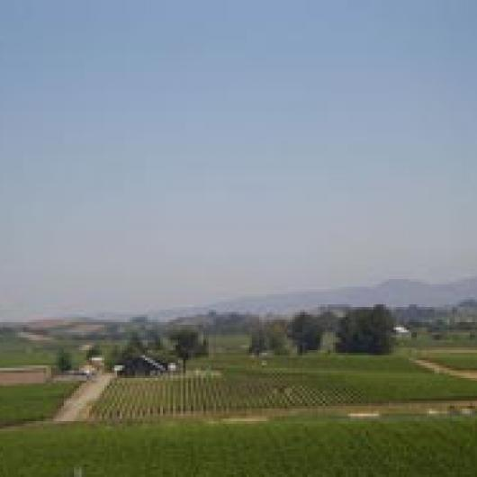 The Carneros region has gentle rolling hills