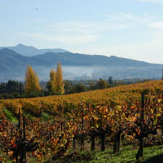 Francis Ford Coppola Presents Rosso & Bianco Wines