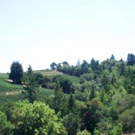 Domaine Chandon vineyard on Mt. Veeder