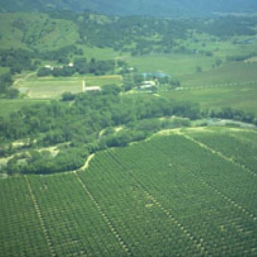 A large swath of riparian habitat borders the Fetzer vineyards in the Hopland area