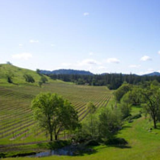 Vineyard at Foote Ranch