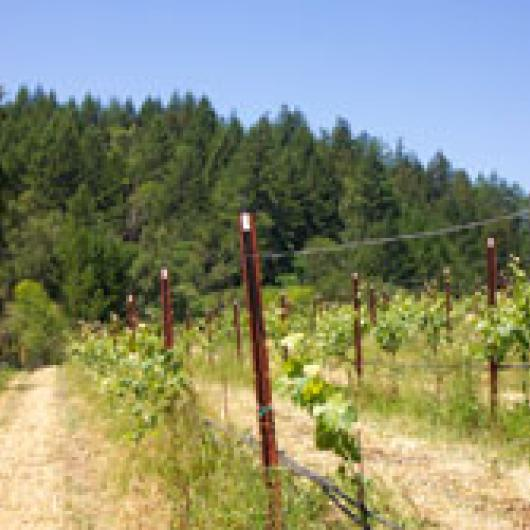 The vineyards at Green Pastures are managed with no tillage reducing soil erosion and runoff to Felta Creek
