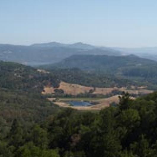 Bancroft Ranch Vineyard