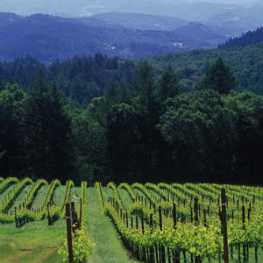 Schramsberg Vineyards – Juster Vineyard