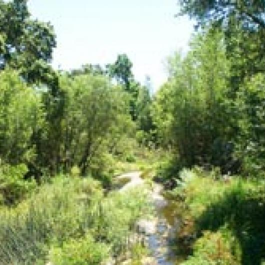 Conn Creek on the Gamble Ranch