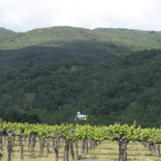 McDowell Valley Vineyards