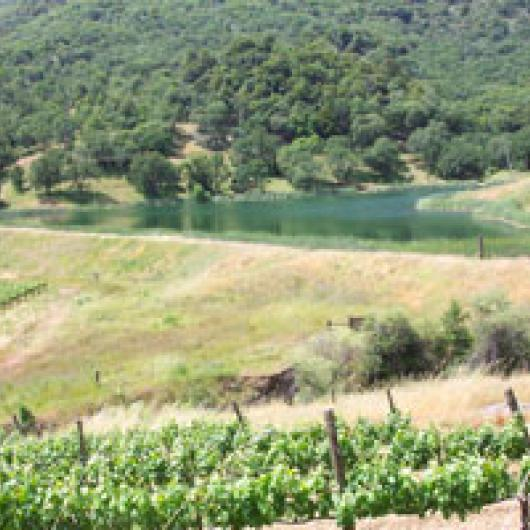 Bonterra Vineyards