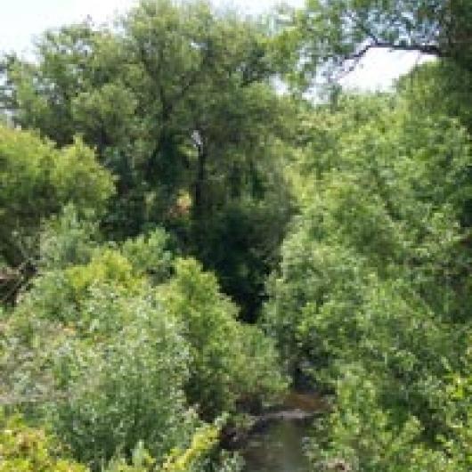 Napa River riparian corridor next to  Wappo Hill Vineyard