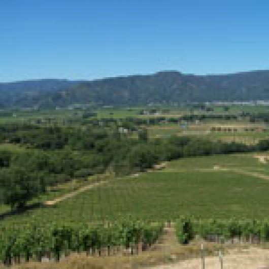 View of vineyard and Ukiah Valley from top of Twinning Ranch.