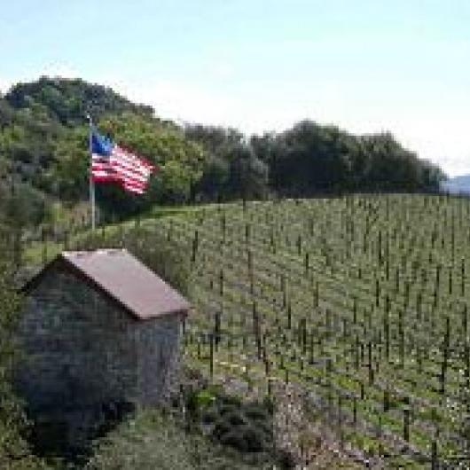 Quarry Vineyard