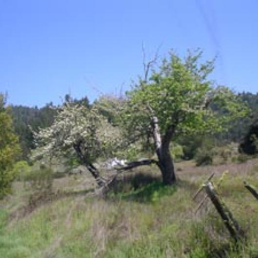 At the Redwood Vista site vineyards replaced old apple orchards