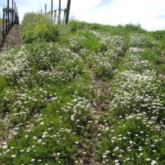 Cover crops protect soil