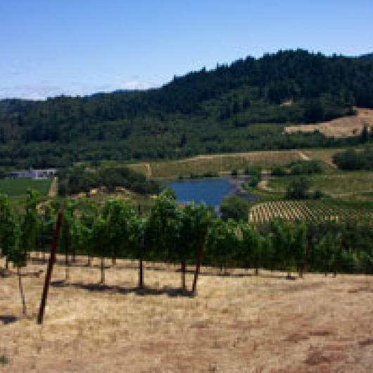 Vineyards and pond at Michel Schlumberger winery in Dry Creek Valley