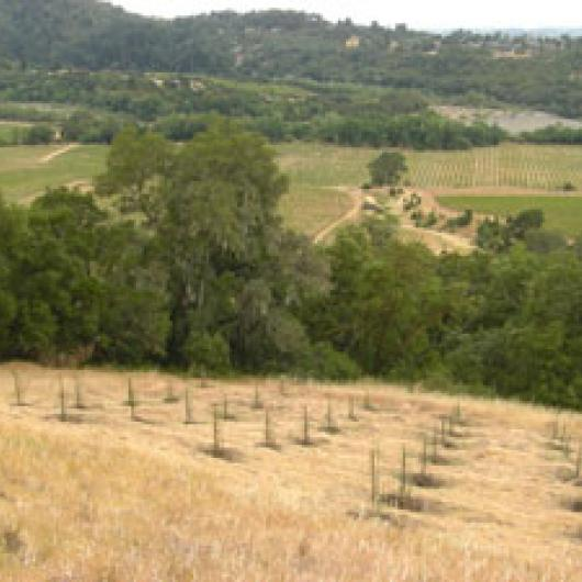 Seghesio Family Vineyards—San Lorenzo Ranch