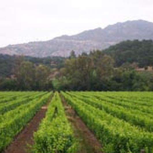 Silverado Vineyards – Home Ranch