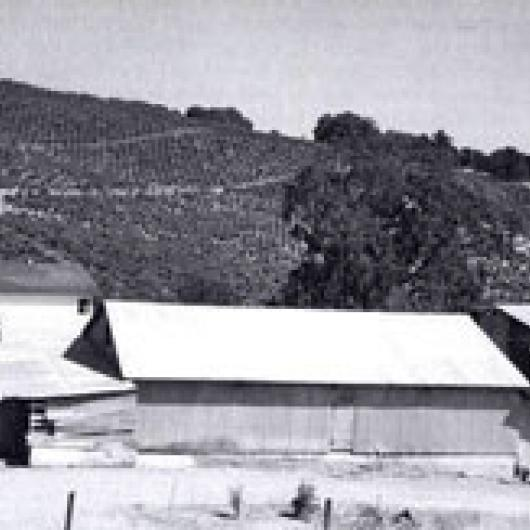 Simi winery vineyards in 1946