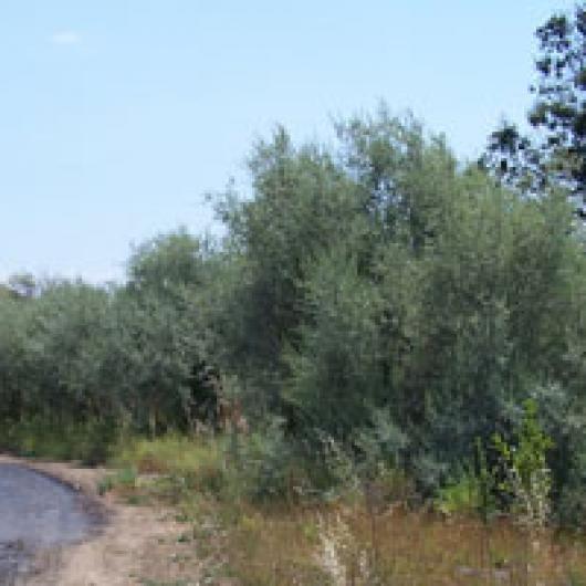 Storey Creek borders vineyards