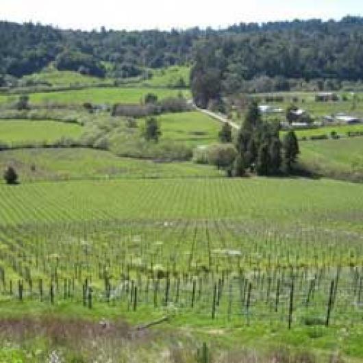 Salmon Creek is visible at the base  of the sloping vineyard at Freestone Vineyards.