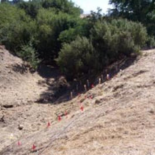Native plant revegetation of ephemeral creek  channel at Willow Lake Vineyard