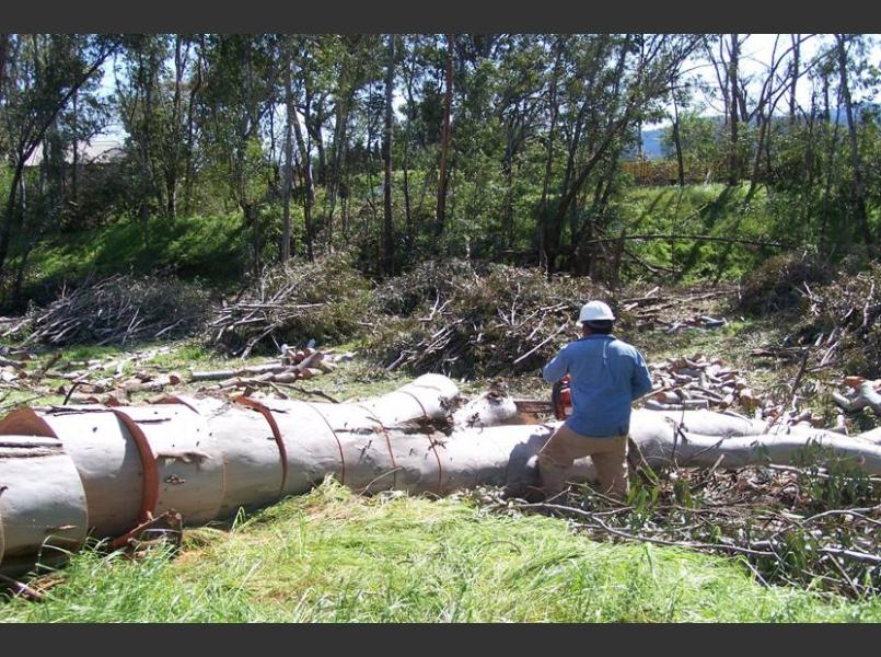 Eucalyptus removal on Conn Creek. Native trees were installed in  winter 2008-2009 by CLSI, Jack Neal and Son, and Heitz Cellars.