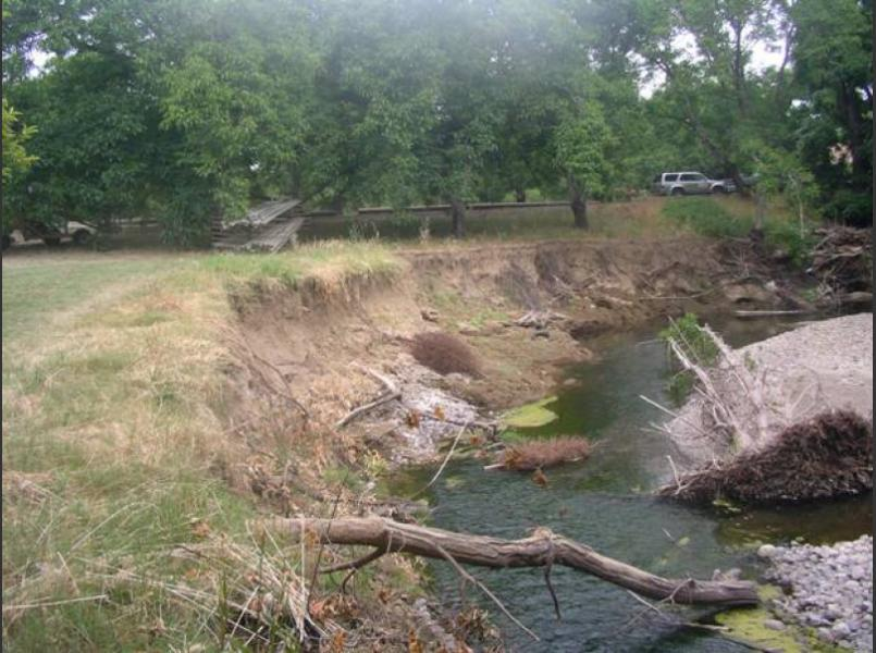 Bank erosion at this site on Suisun Creek will be repaired using native plants and some toe rock.