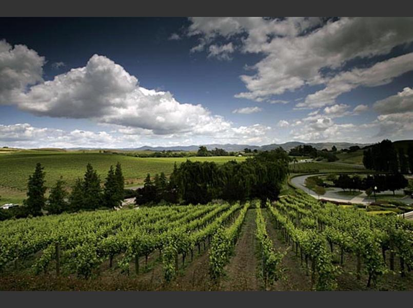 The Carneros region encompasses a large area, including the Carneros and Huichica Creek watersheds