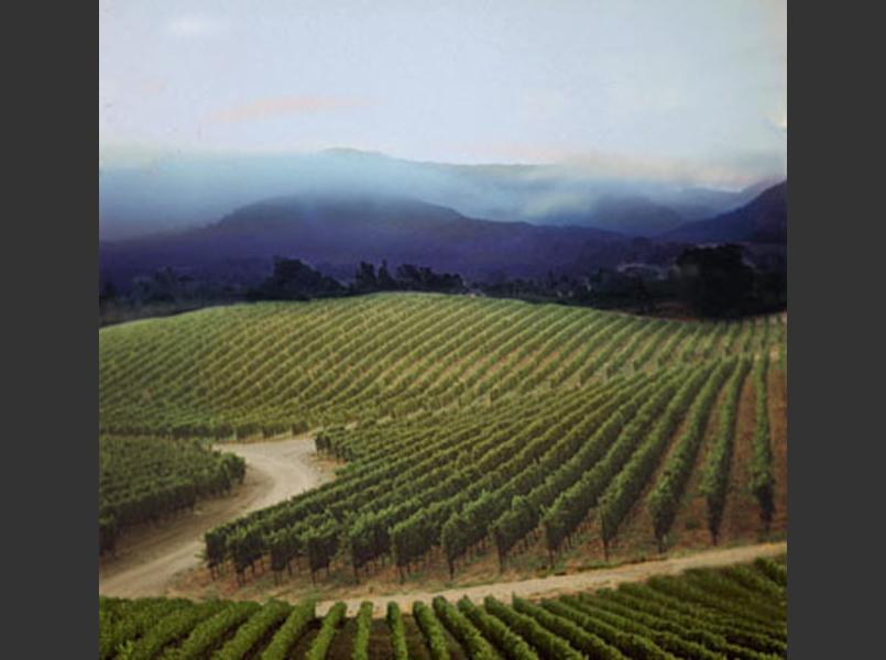 Vineyards east of Napa City in the Coombsville area