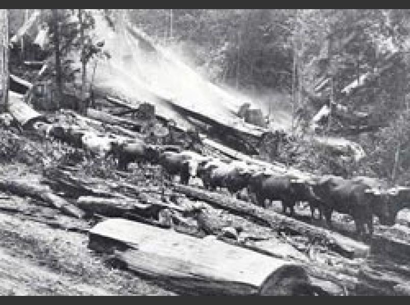Early logging in the Gualala River watershed