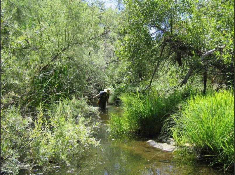 Napa River in springtime