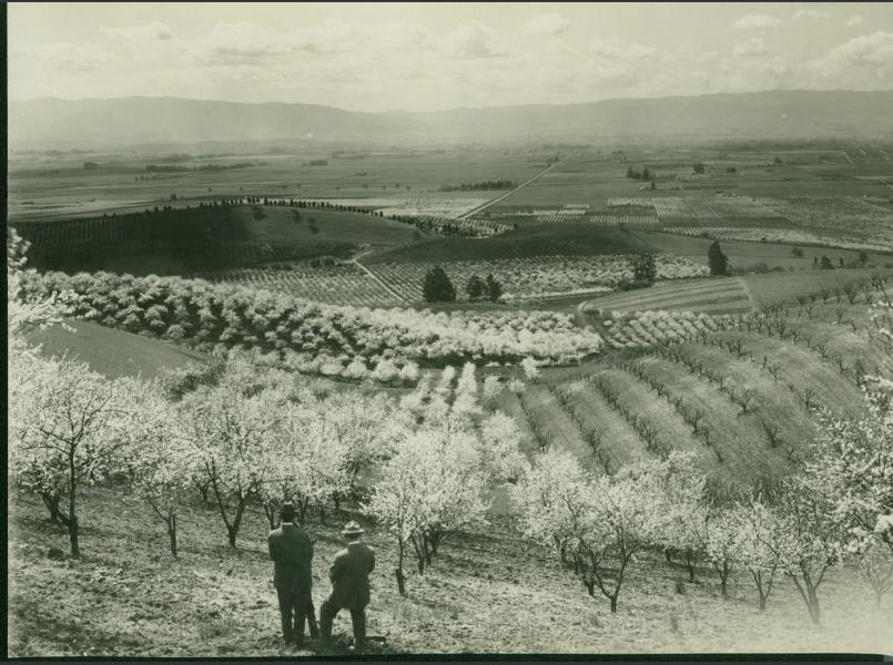 Orchards and Vineyards of Early Santa Clara County