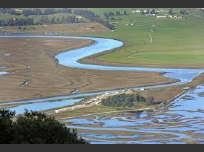 Petaluma River Tidal Marsh