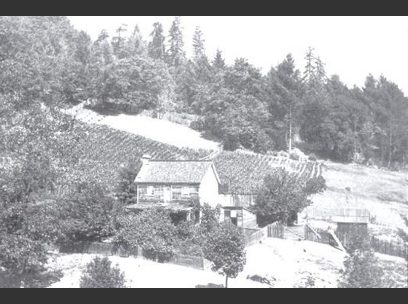 Homestead north of Cazadero