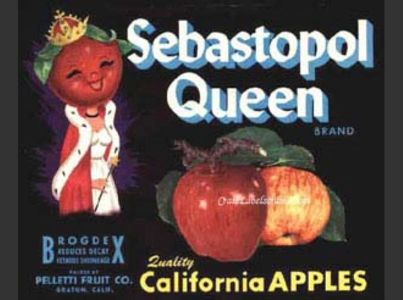 Sebastopol Queen Label