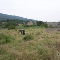 Fish Friendly Farming program staff member  conducts native plant survey on King Farms