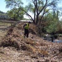 Arundo removal on Suisun Creek in Solano County