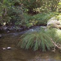 Suisun Creek