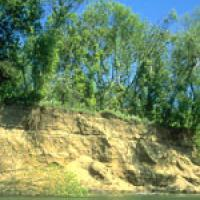 The removal of such large volumes of gravel from the river has resulted in significant environmental damage to the Russian River channel as shown in this photo of the 30 foot eroding banks.