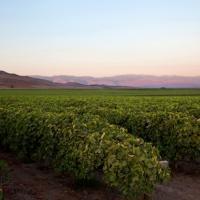 Columbine Vineyards