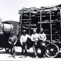 Harvest of tan oak bark from northwestern Sonoma County in 1920