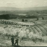 Orchards and Vineyards of Early Santa Clara County