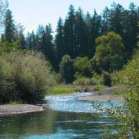 Despite all of the land use changes in the Russian River watershed it continues to support steelhead trout, Coho salmon and Chinook salmon.