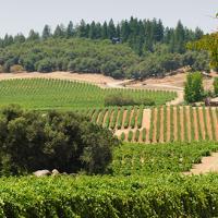 Sierra Foothill Winery