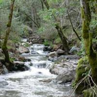 Sonoma Creek is the primary waterway in Sonoma Valley