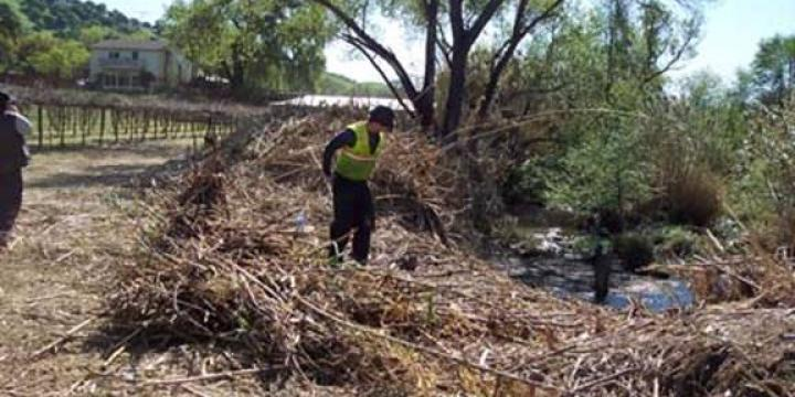 Arundo removal on Suisun Creek in Solano County
